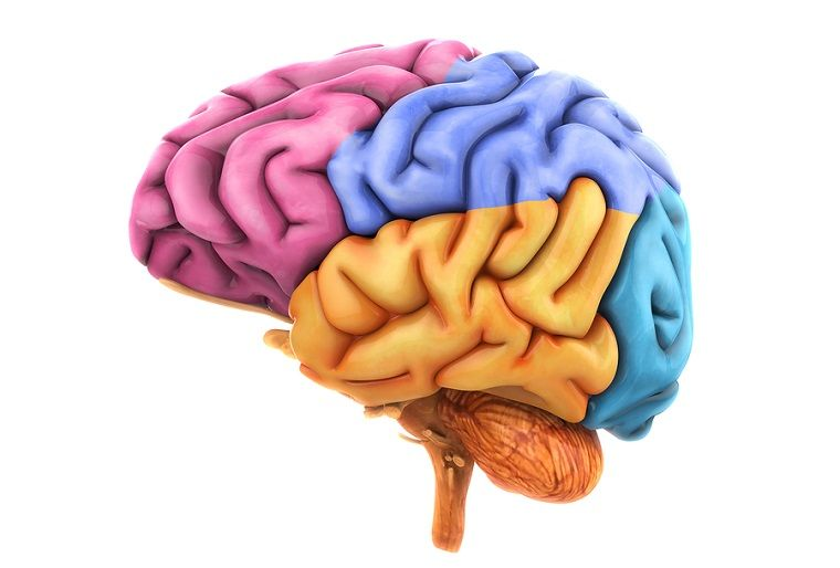 Ictus cerebral, derrame, embolia, mediquo, tu amigo medico, chat médico.