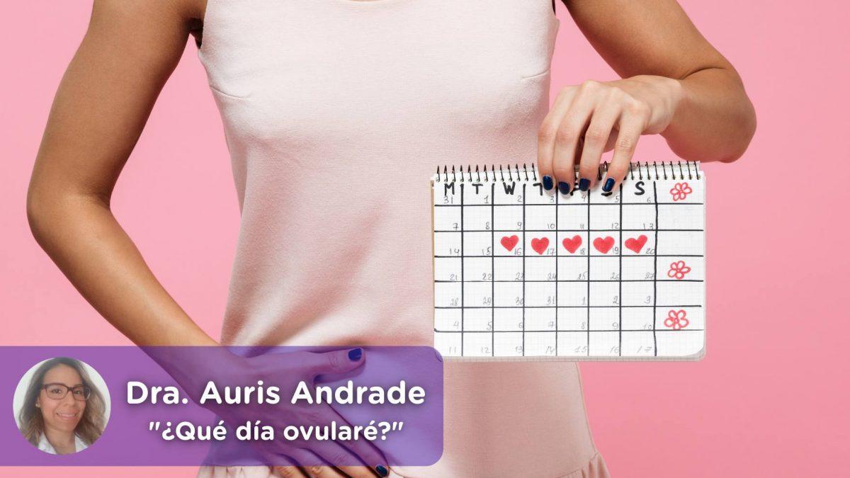 día ovulación, menstruación, fertilidad, embarazo, ovulos, Auris Andrade, Mediquo, Tu amigo médico. Chat médico.