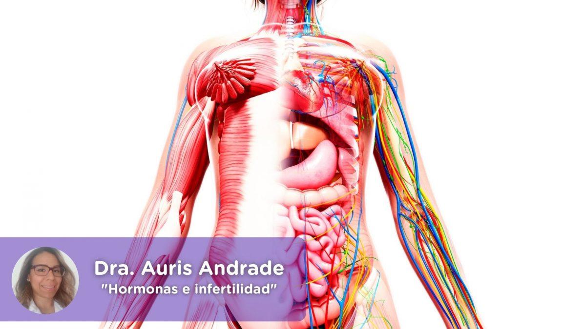 Hormonas e infertilidad femenina mediQuo. Salud. Auris Andrade. Ginecología. Mujer